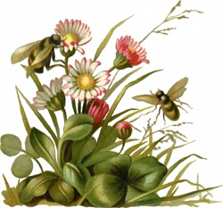 spring_flowers_with_bee_clipart