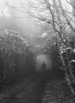 into-the-faerie-wood_src_1