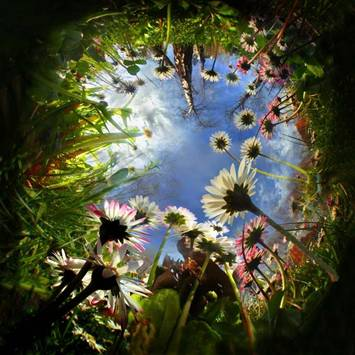 organic-planet